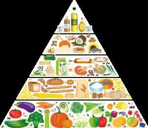 Read more about the article Richtig oder falsch-Ernährungsempfehlungen im Wandel