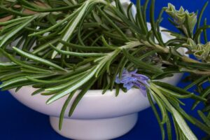 Read more about the article Rosmarin-Rosmarinus officinalis- Heilpflanze des Jahres 2011