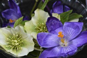 Read more about the article Zistrose – die duftende Heilpflanze